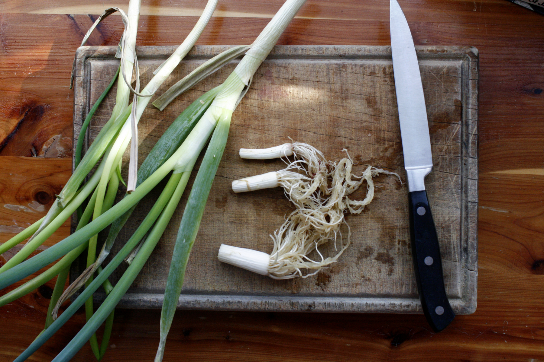 How to re-grow spring onions