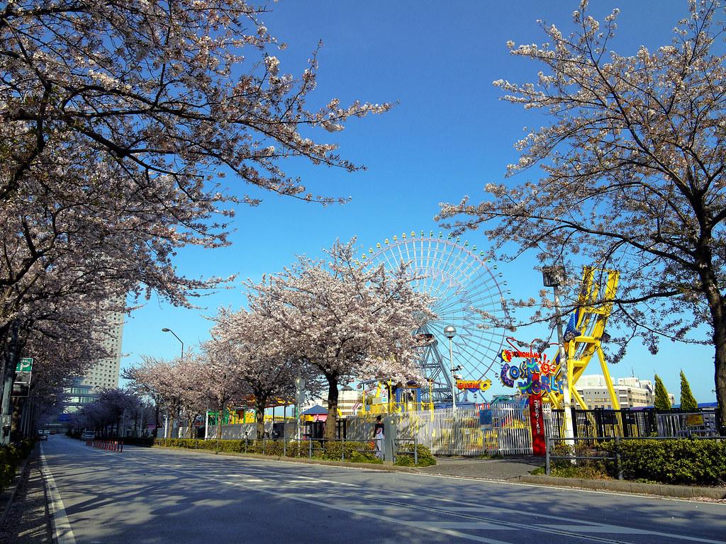 Yokohama Sakura Street