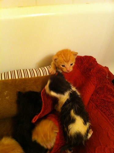 Pile O Kittens Exploring