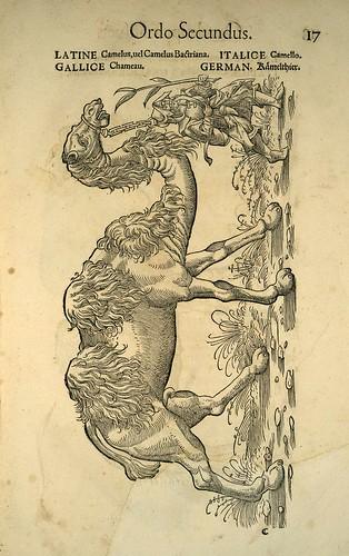 002-camello-Icones animalium- (1553)- Conrad  Gesner- SICD Strasbourg