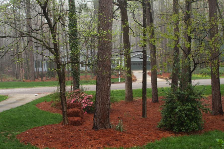Raleigh_Springtime