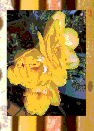 freesias stylized by Cali-rhoz