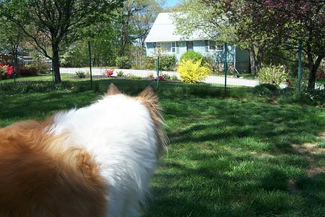 Spring Garden April 26, 2012
