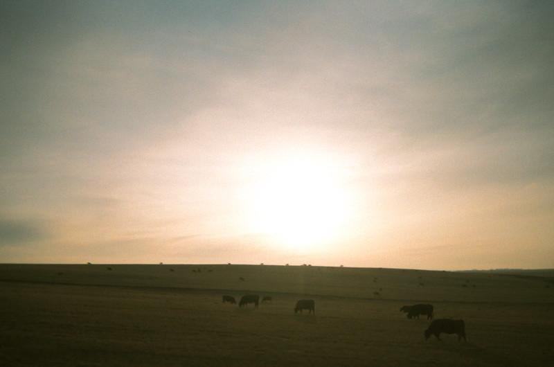 Western Prairies #1