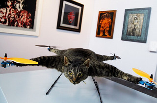 helicopter cat