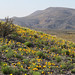Gila Lower Box Canyon by BLM New Mexico