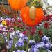 Fleurs Argenteuil