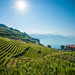 Sunshine in Lavaux