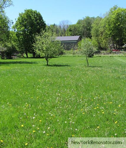 Weedy Yard2