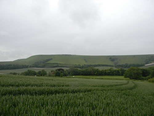 Wheat against the downs