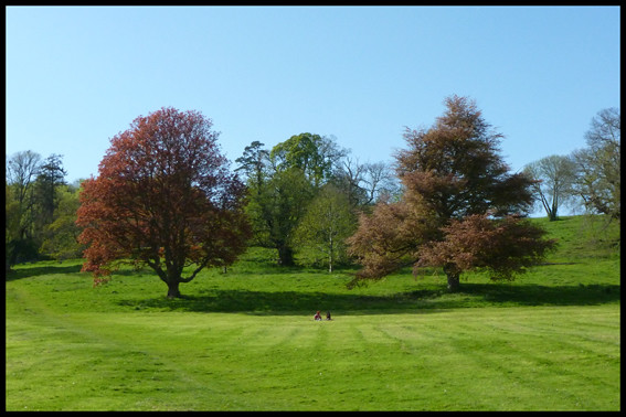 Two Trees, Ashton Court, Bristol