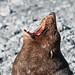 Seals, Sheep & Birds, New Zealand
