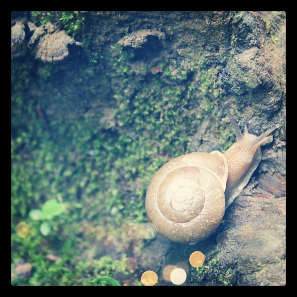 A pretty snail we found #nature #fbphotoadaymay