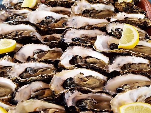 Oysters from Delta del Ebro, Catalonia