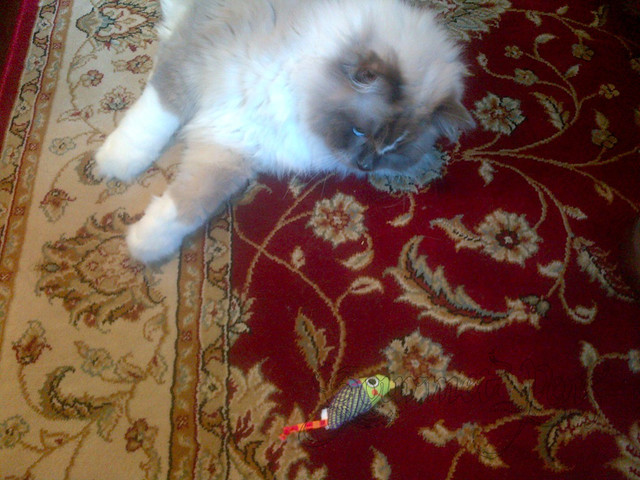 Tyco Playing With Dental Toy