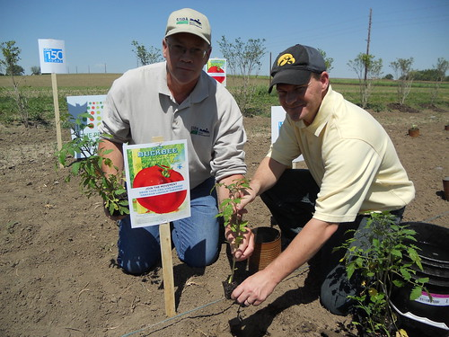 "To help celebrate USDA's 150th anniversary which was on May 15th, USDA Rural Development employee Mike Boyle (left in photo) and community volunteer Josh Meier, planted special heirloom ""Abraham Lincoln"" tomatoes at Hardacre Community Garden in Tipton, Iowa."