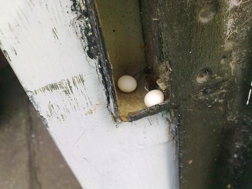 Huevos en la puerta