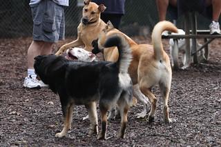Dog_Park003