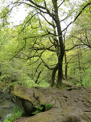 Trees, Stock Ghyll Park, Ambleside