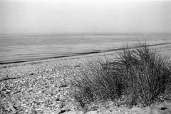 grainy beach by real photos have grain