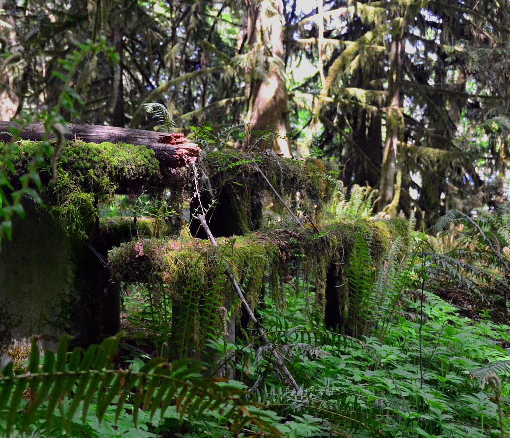 Baker Bay Marina Oregon Tripcarta