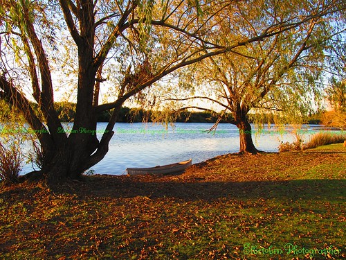 autumn sunset tree art nature canon river uruguay is san shadows shot powershot salvador dolores in sx130