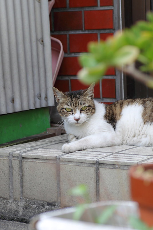 自宅警備員の猫 2