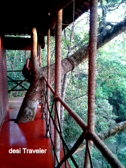 Balcony view tree house rain forest waynad