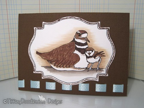 Killdeer & Baby