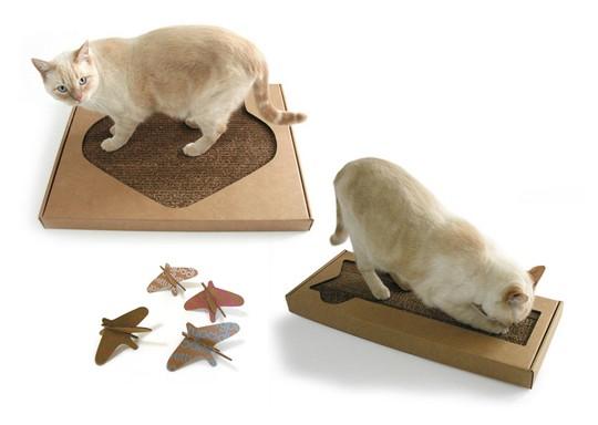 cats&cardboard_014