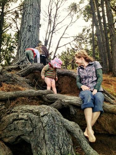 Ascending the pine...