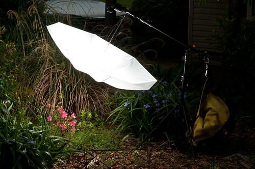 Day - 89 Soft Light Setup