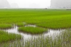 Baie d'Ha Long Terrestre - Ninh Binh - Hoa Lu - 21