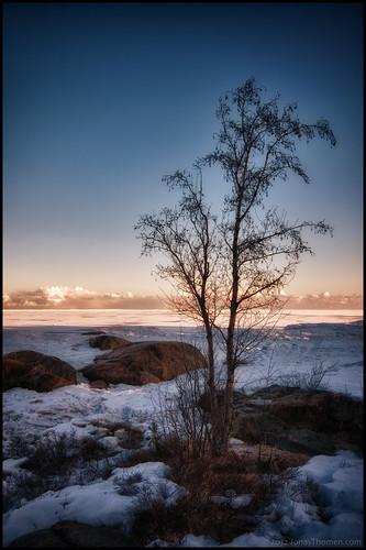 sea snow tree ice beach clouds strand sunrise is rocks birch björk snö hdr träd hav soluppgång moln klippor 7ex1ev
