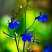 Blue Flowers by onyonet photo studios
