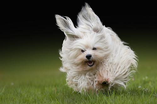 Running Hiro