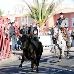 Courses, abrivados, encierros, roussatailles... site fotos 6984693226_90859fa67f_m
