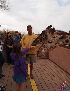 Feeding a Giraffe at the Phoenix Zoo