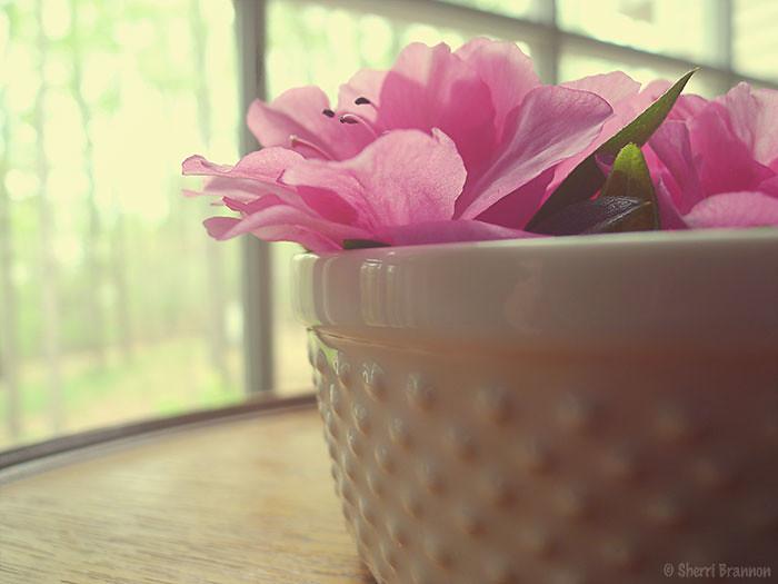 bowl of azaleas