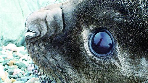 02何宣慶-海豹之眼