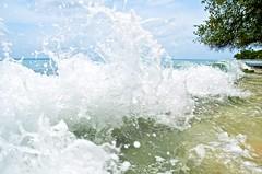 Barbados-2MY_2883