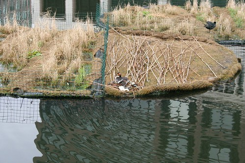 Birds nesting at Canary Wharf