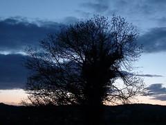 Doppelbaum in der Abenddämmerung (Photo No. 2) / © Marco PETER