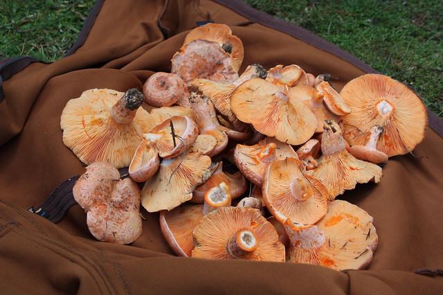 Mushroom hunt May 5