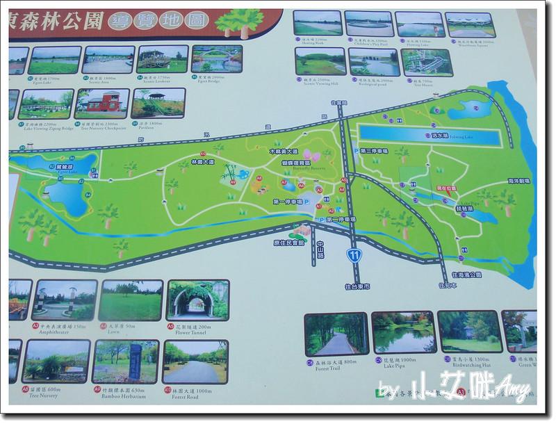台東黑森林琵琶湖P7242417