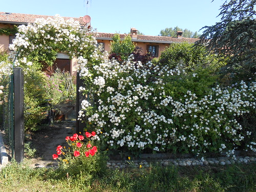 Un giardino lungo e stretto da sistemare - Sistemare il giardino ...