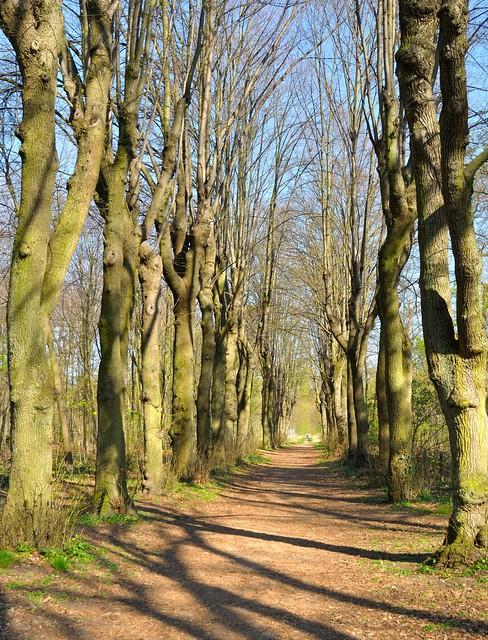 Bois de Vincennes  Bucket ListParis  Pinterest  Paris France