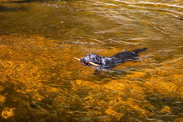 Minnewaska State Park - Wawarsing, NY - 2012, May - 07.jpg