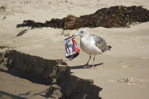 海洋垃圾令海洋窒息,許多海洋生物受到傷害。(圖片來源:「許海洋一個未來」特展)