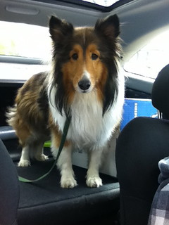 Koji backseat driver